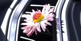 Дезинфекция и чистка испарителя кондиционера автомобиля: цена и периодичность проведения